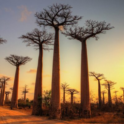 Baobab-Sunset-AdobeStock_163621331_small