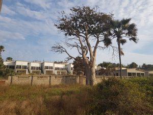Baobab Urbanisation