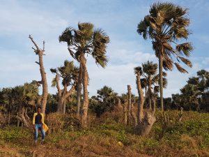 Baobab Sustainability