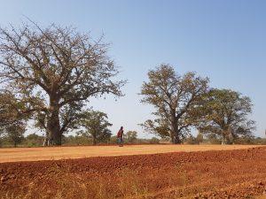 Baobab Risks