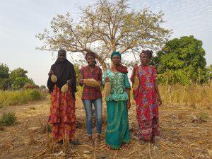 Baobab Harvest
