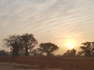 Baobabs at Dusk