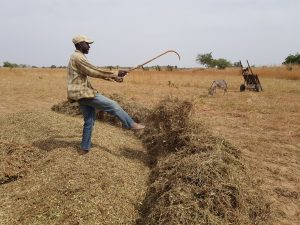 Local Farming Skills