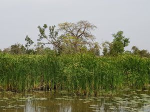 Water Baobabs