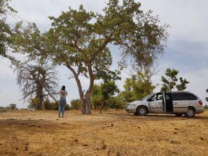 Baobab Bushland