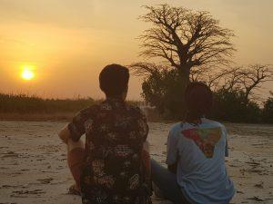 Baobab Sunsets