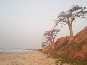 Beach side Baobabs