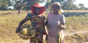 Baobab Harvesting